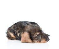 Ziek puppy Geïsoleerdj op witte achtergrond Royalty-vrije Stock Afbeeldingen