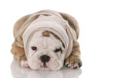 Ziek of ziek puppy royalty-vrije stock foto
