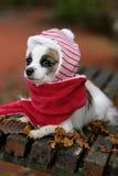 Zieke hond Stock Afbeeldingen