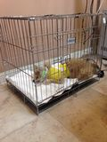 Zieke Hond Stock Foto