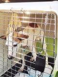 Zieke Hond royalty-vrije stock foto