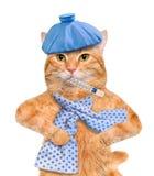 Zieke kat stock afbeeldingen