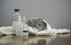 Zieke kat op een lijst met geneesmiddelen Stock Foto's