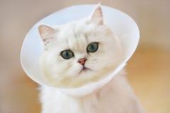 Zieke Katten Royalty-vrije Stock Afbeeldingen