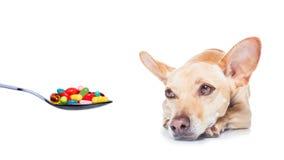 Zieke zieke hond Stock Foto