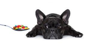 Zieke zieke hond Stock Afbeelding