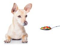 Zieke zieke hond Stock Foto's