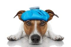 Zieke zieke hond Royalty-vrije Stock Afbeeldingen