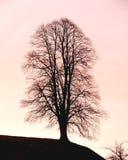 Ziel van de boom. royalty-vrije stock fotografie