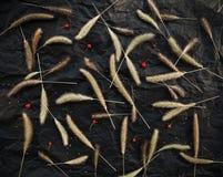 Zielarscy spikelets i czerwone jagody na czarnym tle Herbarium deseniowy elegancki projekt Obrazy Royalty Free