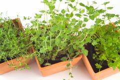 zielarscy więcierze obraz stock