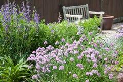 Zielarski ogród Zdjęcie Royalty Free