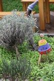 Zielarski ogród Obraz Royalty Free
