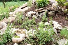 Zielarskiego ogródu spirala fotografia stock