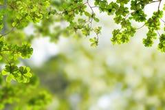 zieleń świezi liść Zdjęcia Royalty Free
