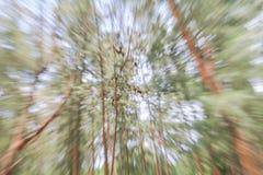 Zieleń drzewny zamazany tło, prędkość zoomu skutek Obrazy Stock