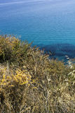 zieleń i żółta świrzepa suniemy z krystaliczną błękitne wody morze Fotografia Royalty Free