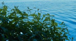 Zieleń i błękit Jezioro Lato Obrazy Royalty Free