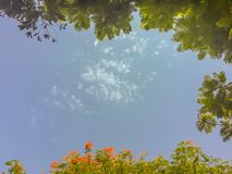 Zieleń i czerwień kwiatów rama opuszczamy z niebieskiego nieba tłem i Fotografia Royalty Free