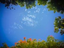 Zieleń i czerwień kwiatów rama opuszczamy z niebieskiego nieba tłem i Zdjęcia Royalty Free