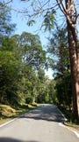 Zieleń i Lusk bagażnika droga w lesie Fotografia Stock