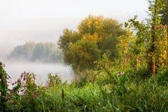 Zieleń i złoty krajobraz na brzeg rzeki Fotografia Stock