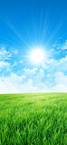 Zieleń jak łąka w słońcu Zdjęcia Stock