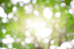 Zieleń, jaskrawy, zdrowy, i światło słoneczne lato dla tła Obrazy Royalty Free