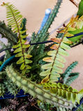 Zieleń kaktus i liście Zdjęcie Royalty Free