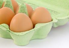 zieleń kartonu jajek zieleń Zdjęcie Royalty Free