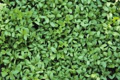 zieleń kiełkuje potomstwa Obraz Royalty Free