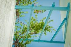Zieleń kwitnie na błękitnym jasnym nieba tle Obraz Royalty Free