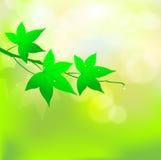 Zieleń leafs światła słonecznego tło, Wektorowy ilustrator ilustracji