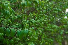 zieleń leafs mały zdjęcia stock