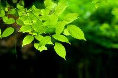 zieleń liść Obrazy Stock