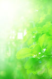 zieleń liść zdjęcia stock
