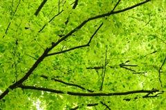 zieleń liść Fotografia Stock