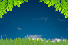 Zieleń liść Zdjęcie Royalty Free