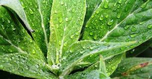 Zieleń liści mokry tło Zdjęcia Royalty Free