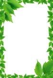 Zieleń liści rama zdjęcia stock