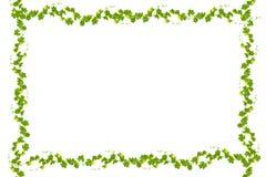 Zieleń liści rama odizolowywająca na białym tle, kopii przestrzeń dla Fotografia Stock