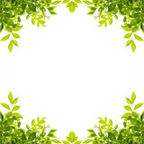 Zieleń liści rama odizolowywająca na bielu Obraz Royalty Free