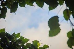 Zieleń liści rama z dramatycznym nieba tłem i środek kopii przestrzeń dla teksta Natury rama zielony urlop rozgałęzia się na chmu Zdjęcie Stock