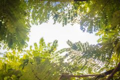 Zieleń liści rama z dramatycznym nieba tłem i środek kopii przestrzeń dla teksta Natury rama zielony urlop rozgałęzia się na chmu Obraz Stock