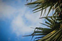 Zieleń liści rama z dramatycznym nieba tłem i środek kopii przestrzeń dla teksta Natury rama zielony urlop rozgałęzia się na chmu Obraz Royalty Free