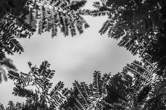 Zieleń liści rama z dramatycznym nieba tłem i środek kopii przestrzeń dla teksta Natury rama zielony urlop rozgałęzia się na chmu Fotografia Royalty Free