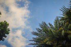Zieleń liści rama z dramatycznym nieba tłem i środek kopii przestrzeń dla teksta Natury rama zielony urlop rozgałęzia się na chmu Zdjęcia Royalty Free