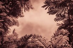 Zieleń liści rama z dramatycznym nieba tłem i środek kopii przestrzeń dla teksta Natury rama zielony urlop rozgałęzia się na chmu Obrazy Stock