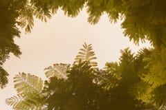 Zieleń liści rama z dramatycznym nieba tłem i środek kopii przestrzeń dla teksta Natury rama zielony urlop rozgałęzia się na chmu Obrazy Royalty Free