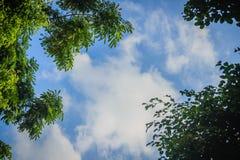 Zieleń liści rama z dramatycznym nieba tłem i środek kopii przestrzeń dla teksta Natury rama zielony urlop rozgałęzia się na chmu Zdjęcia Stock